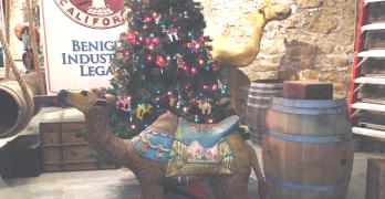 BENICIAHISTORICALMUSEUM staff has already picked out their Christmas tree. Keri Luiz/Staff